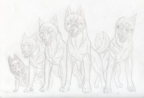 Ginga German Shep Pack by KasaraWolf