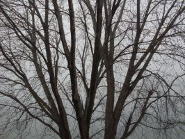 Tree Against Wall of Fog by ice-queen-blue