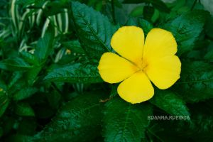 Yellow flower by roannart