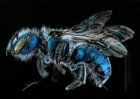 Blueberry Bee by AmBr0