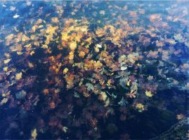 Leaves Under Water by rsiphotography
