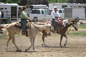 Western Paint Horses in Warm-Up Ring by HorseStockPhotos