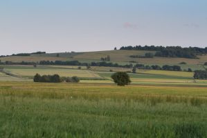 Meadow Pasture Landscape 9 by LuDa-Stock