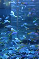 Shoal Of Fish 4 by ManicHysteriaStock