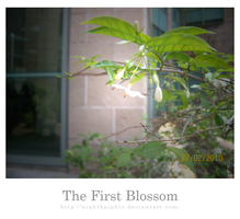 The First Blossom by nightknights