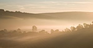 Golden Morning by adamlack
