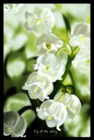 Lily of The Valley by Trafalmadoriane