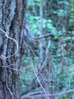 Squirrel by Wicasa-stock