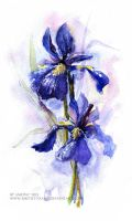 Irises by Ametist-nyako
