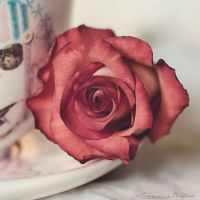 Rose tea 2 by FrancescaDelfino