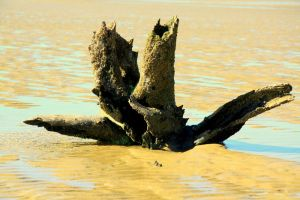 Airlie Driftwood by Intergrativeone