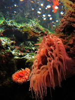 See a Sea Anemone by AndromedaRoach