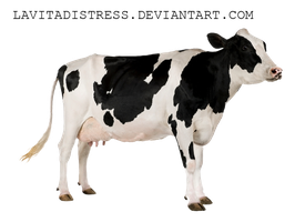 Betsy the Cow- Png stock by KarahRobinson-Art