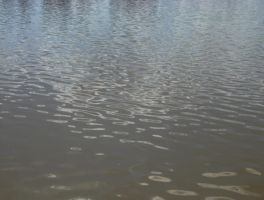 Water Ripples 1 by athlinia-stock