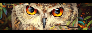 owl eyes by AlaxendrA
