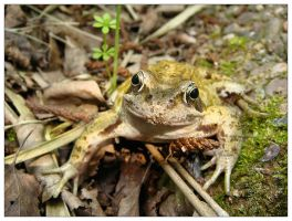 Toad by osmo