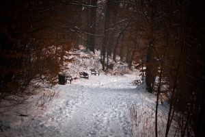 Winter in Maksimir Park XIX by hrvojemihajlic