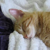 My own blanket by lucytherescuedcat