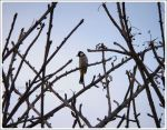 lonely Bird .. by SilentPain0