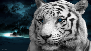 White Tiger by artistdanny25