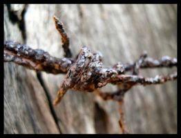Barbed Wire III by Pianochick66