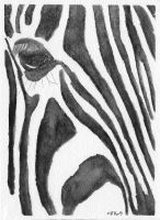 Zebra Speed Paint 2 by IckyDog