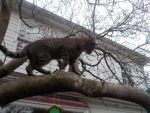 Barkly in a tree!!!!!!!!!!!!!! by Cindercorn