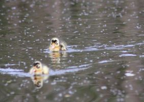 Two little ducklings by JetteReitsma