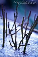 Growing From Ice - Day 023 by LMPPhoto