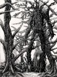 Treebeard and Fangorn Forest by TheChesterCat