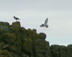 Birds on the Stones by ttwm-stock