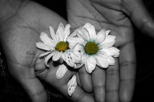 A FLOWER STORY - ONLY FOR YOU by Saher4ever