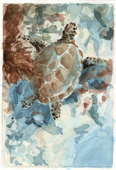 Underwater Seaturtle - Sketch by Cath-Ion