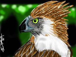 Philippine Eagle by ejava714