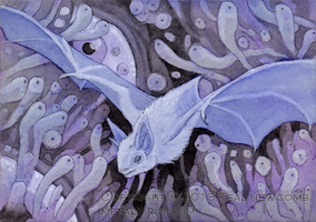 Bat Aceo by thedancingemu