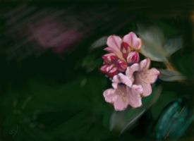 Rhododendrons by Spwrinkle