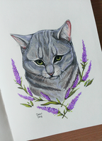 Gray cat by IsaviDog