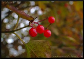 Little Red Eyecatchers by Miarath