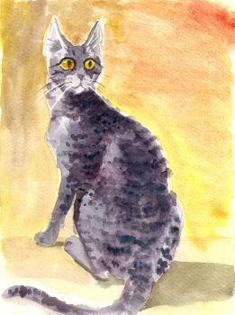 Cat after radiotherapy by Jaskra