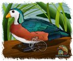 African Pygmy Goose by NadilynBeato