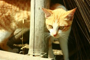 Orange Cat by thedismantled