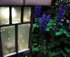 Light flowers by Angelos-Griever
