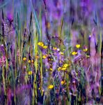 The Fields Of Color V by MarcoHeisler