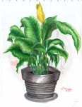 Plant in pot by SilverOceanAlchemist