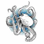 Octopus by sohyoushing