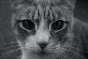 Close up of my cat, black and white effects by Razfredericks