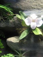 white small orchid by CotyStock