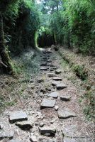 Bamboo and Rock Path by meihua