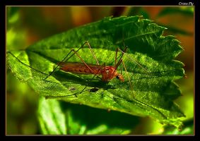 Crane Fly 07 by boron
