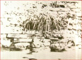 etching onto perspex by Addsy